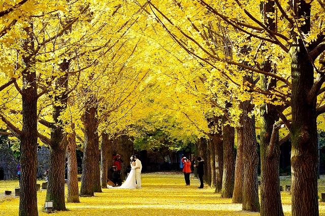 Con đường lãng mạn này còn được nhiều cặp đôi lựa chọn để chụp ảnh cưới