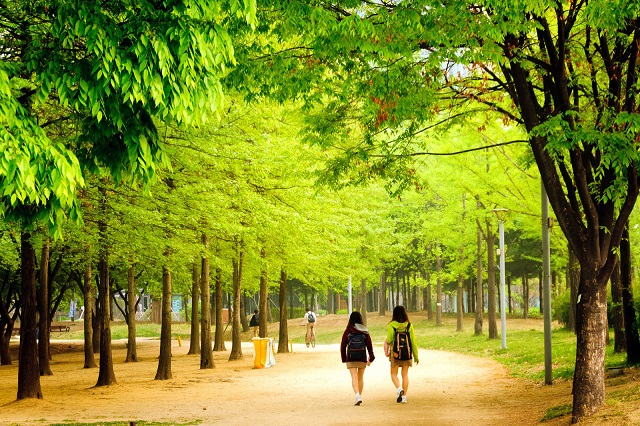 Seoul Forest điểm đến lý tưởng cho người yêu thiên nhiên ở xứ Hàn