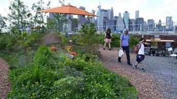 """Swale – khu vườn """"độc nhất vô nhị"""" ở New York"""