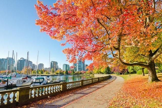Công viên Stanley lãng mạn vào mùa thu