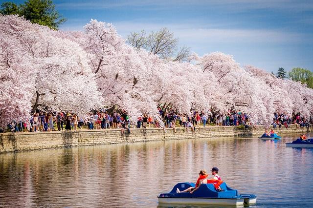 Không khí tươi vui tại Lễ hội Hoa Anh Đào ở Washington