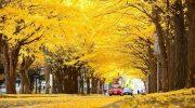 Khám phá vườn rẻ quạt Gangwon khi đi du lịch Hàn Quốc