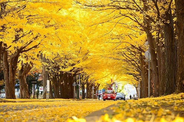 Vườn cây rẻ quạt Gangwon là điểm đến đầy lãng mạn của Hàn Quốc