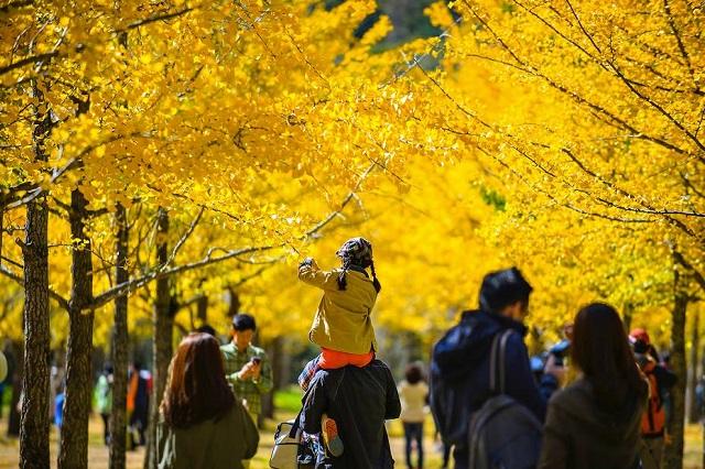 Rất nhiều du khách tới vường rẻ quạt Gangwon mỗi năm